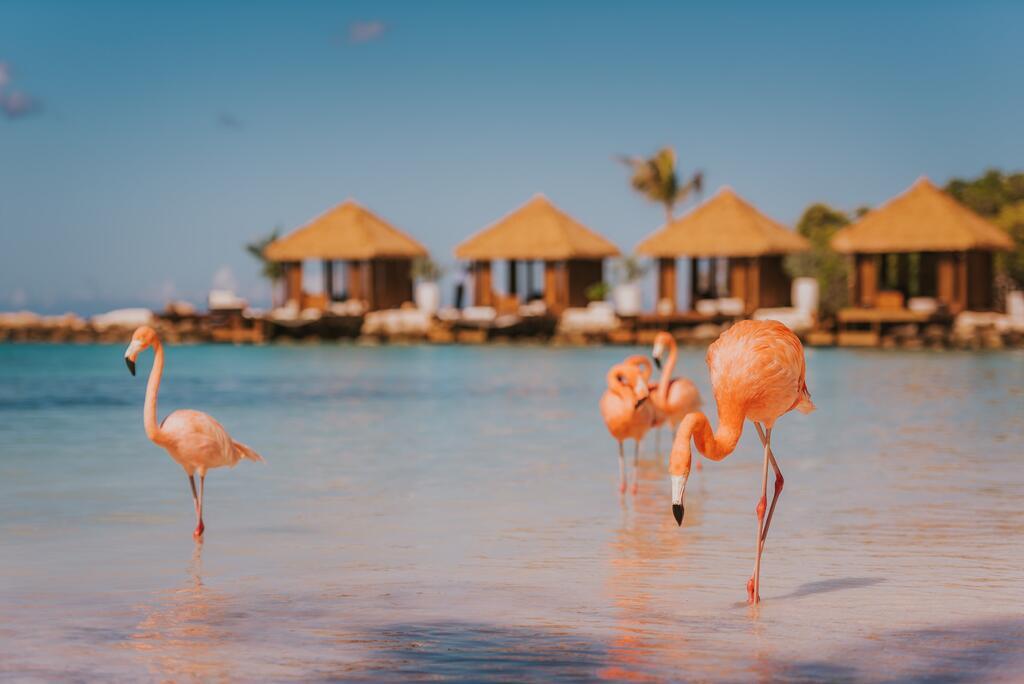 Почивка в Аруба – гарантирано заминаване