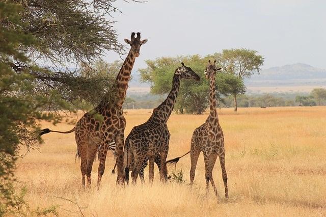 Нова Година на о-в Занзибар и Сафари в Танзания