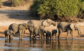 Топ 5 на Националните паркове в Танзания - My Way Travel