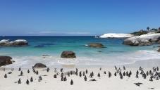 Приключения в Южна Африка - Кейптаун - Водопадите Виктория - Йоханесбург - Сейшели