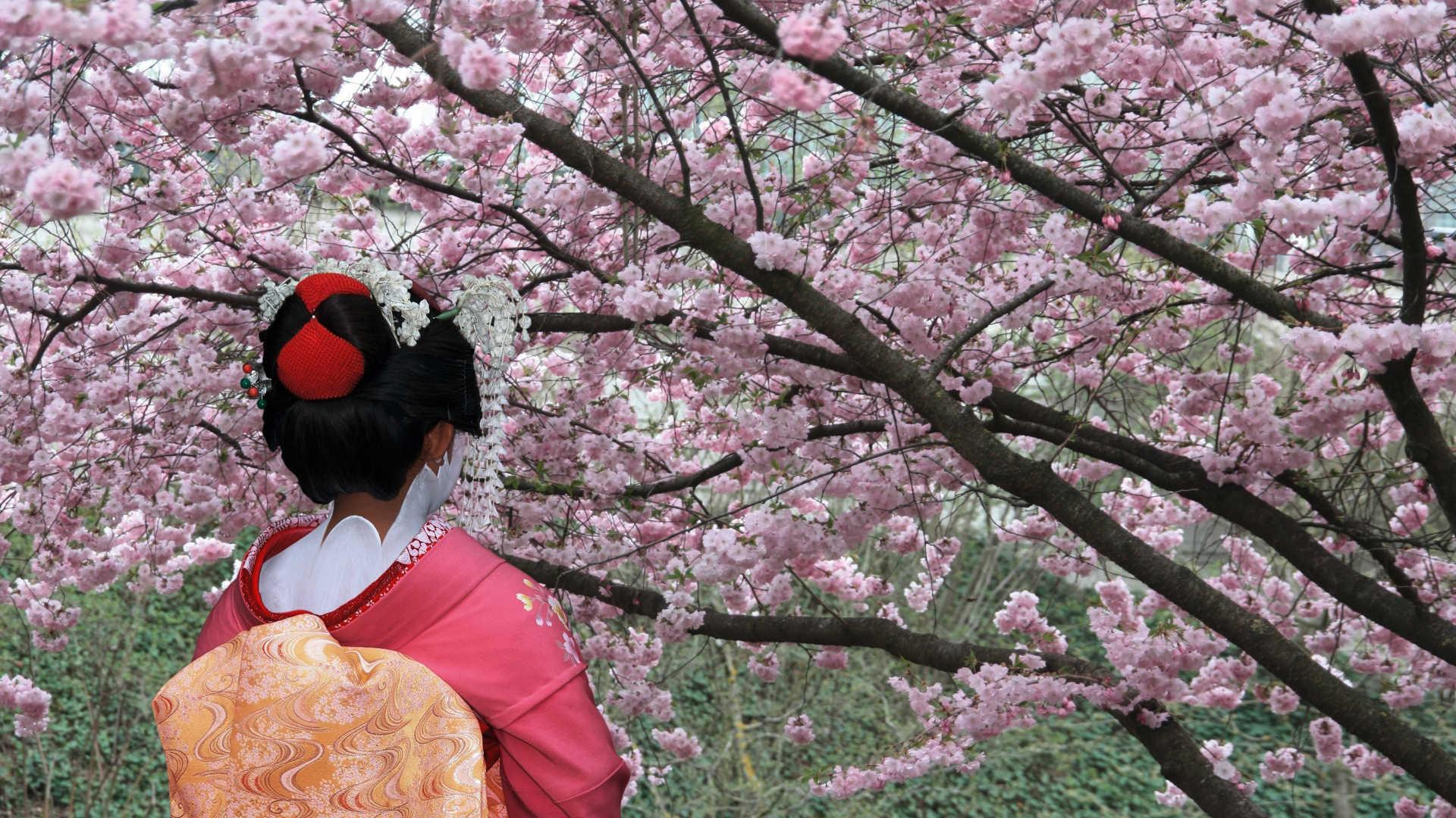 Екскурзия в Южна Корея и Япония - древни традиции и високи технологии 2020, Екскурзия в Япония My Way Travel