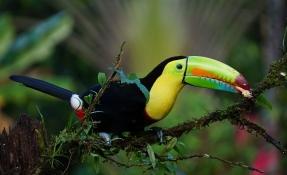 11 интересни факта за Коста Рика - My Way Travel