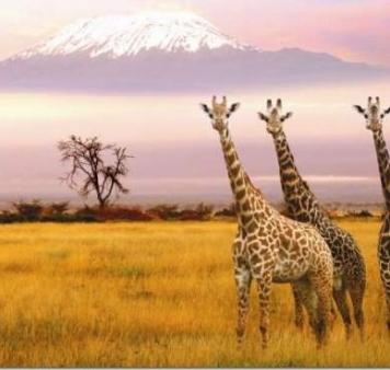 Сафари в Танзания с почивка в Занзибар - организирана група с водач!