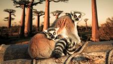 Екскурзия в Mадагаскар с водач на български език, Екскурзия Мадагаскар, Екскурзия Мадагаскар 2021