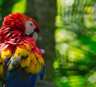 Коста Рика - екзотика и приключения!