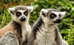 12 причини да посетите остров Мадагаскар  - My Way Travel